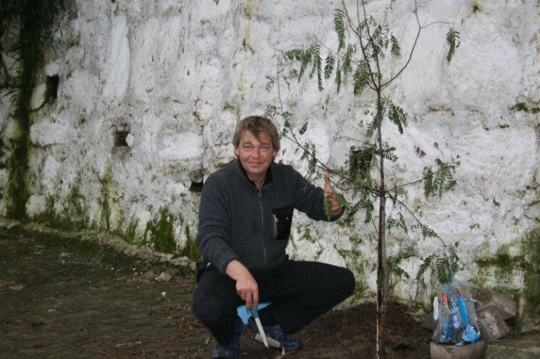 Pfefferbaum pflanzen